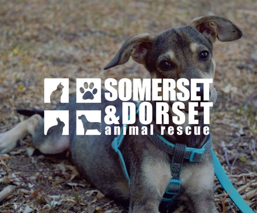 Somerset and Dorset Animal Rescue
