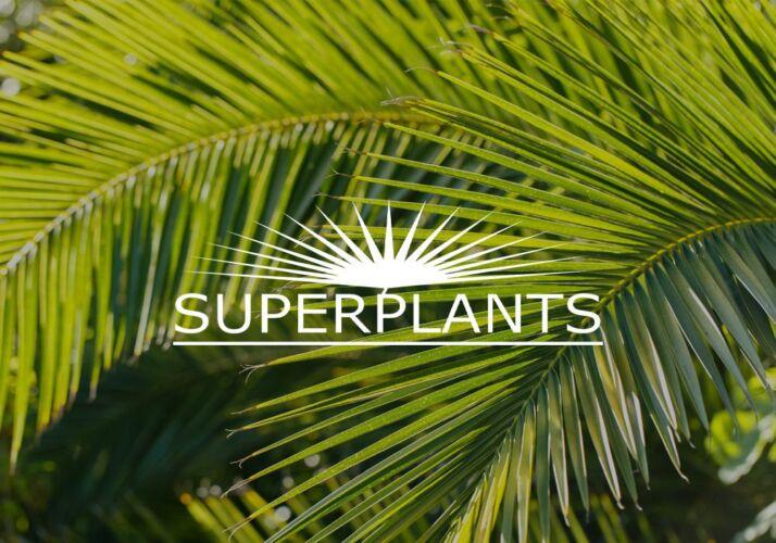 Superplants